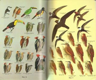 A field guide to the birds of Mexico.