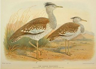 The birds of tropical west Africa: with special reference to those of the Gambia, Sierra Leone, the Gold Coast and Nigeria.