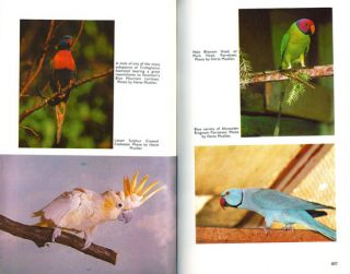 Parrots and related birds.