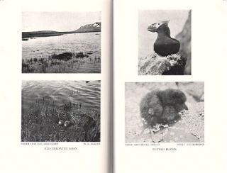Life histories of North American diving birds: Order Pygopodes.