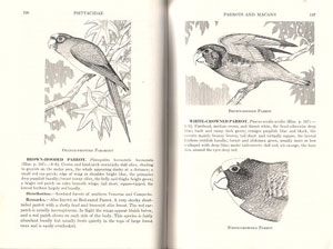 Birds of Mexico: a guide for field identification.
