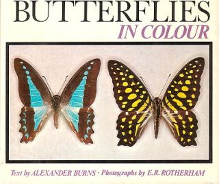 Australian butterflies in colour. Alexander Burns