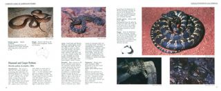 Graeme Gow's complete guide to Australian snakes.