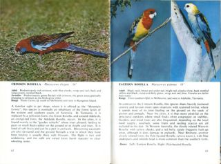 Common Australian birds of towns and gardens.