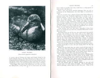 Birds of the Falkland Islands: a record of observation with the camera.