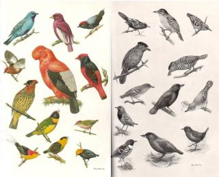 The birds of Colombia: and adjacent areas of South and Central America.