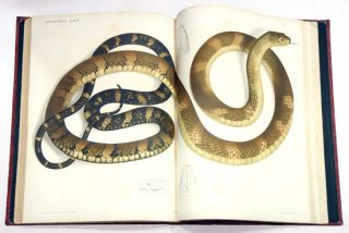 The Thanatophidia of India; being a description of the venomous snakes of the Indian Peninsula with an account of the influence of their poison on life and a series of experiments.