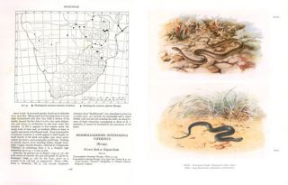 Snakes of southern Africa.