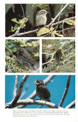 Evolutionary dynamics of a natural population: the Large Cactus Finch of the Galapagos.