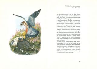 Birds of Europe: illustrations by John Gould.