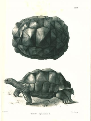 The gigantic land-tortoises (living and extinct) in the Collection of the British Museum.