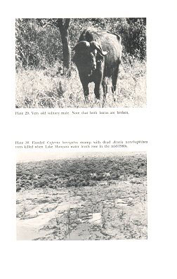 The African buffalo: a study of resource limitation of populations.