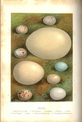 Birds' nests, eggs and egg-collecting.