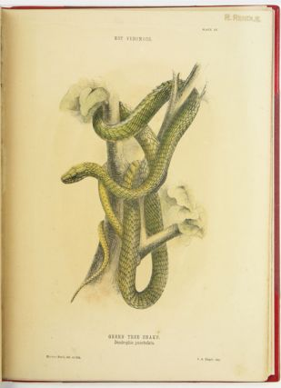 The snakes of Australia; an illustrated and descriptive catalogue of all the known species.