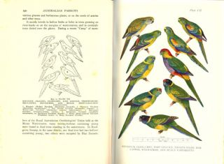 Australian parrots: their habits in the field and aviary.