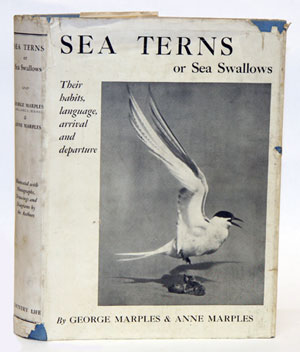 Sea terns or sea swallows: their habits, language, arrival and departure. George Marples, Anne...