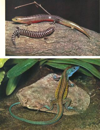 The world of amphibians and reptiles.