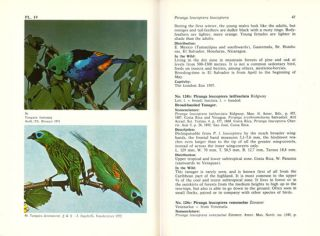 Tanagers.