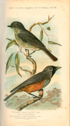 A list of the insectivorous birds of New South Wales
