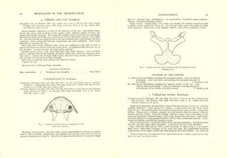 A monograph of the frogs of the family Microhylidae.