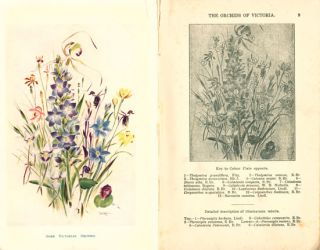 The orchids of Victoria.