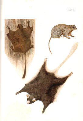 The rodents of West Africa.