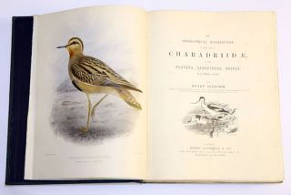 The geographical distribution of the family Charadriidae, or the plovers, sandpipers, snipes and their allies.