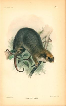 Catalogue of the Marsupialia and Monotremata in the collection of the British Museum (Natural History).