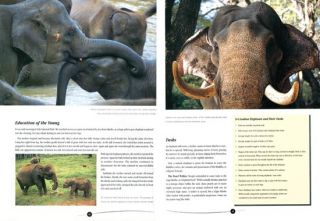 Aliya: stories of the elephants of Sri Lanka.