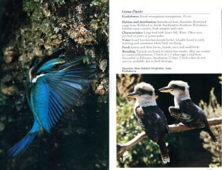 The Reed field guide to New Zealand wildlife.