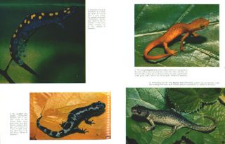 Living amphibians of the world.