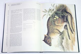 Kangaroos: with modern commentaries by Joan Dixon.
