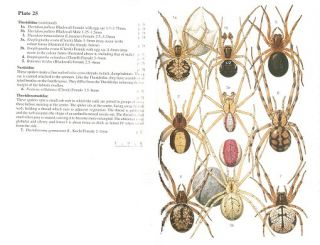 Spiders of Britain and Northern Europe.