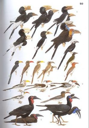 Birds of eastern Africa.