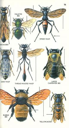A field guide to insects: America north of Mexico.