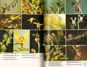 A field guide to the wild flowers of south-east Australia.