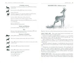 The safari companion: a guide to watching African mammals.