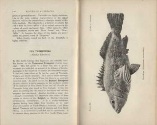 Fishes of Australia: a popular and systematic guide to the study of the wealth within our waters.