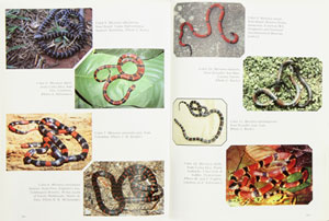Coral snakes of the Americas: biology, identification, and venoms.