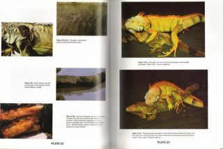 Iguana Iguana: guide for successful captive care.