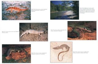 The natural history of monitor lizards.