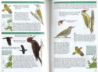 Pocket guide to the birds of Britain and northwest Europe.
